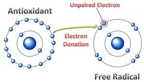 How Antioxidants Diffuse Free Radicals by Donating an Electron