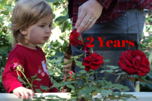 2 years, two year old ruby smells the roses and learns about her world