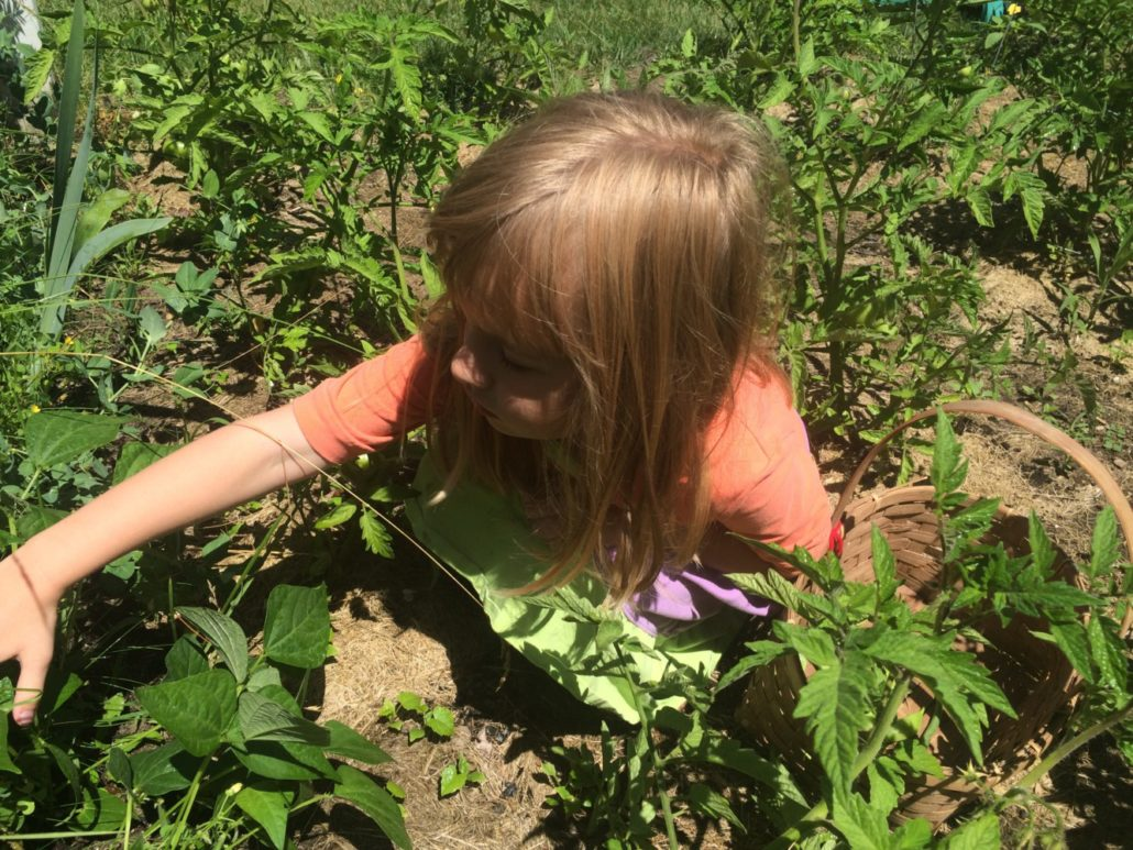 Ruby Picking Beans in Our Garden